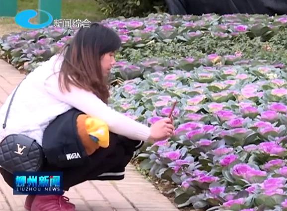 春节七天全市接待游客185.1万人次